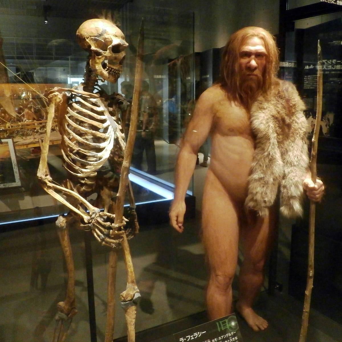 Resultado de imagen para heredado de los neandertales.