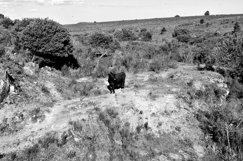 Campo en Pajas Blancas destinado a posible explotación minera. Foto: Federico Gutiérrez